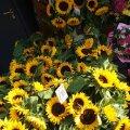 ТОП-5 самых популярных цветов августа на рынке Виру: значение и советы по уходу