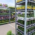 Хорошая новость для садоводов! Первая сеть розничной торговли открыла уличную продажу товаров для сада