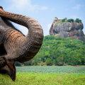 Detsembris saab soodsalt Sri Lankale, pileteid on saadaval ka jõuludeks
