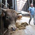 Паромный король Леэдо стал крупнейшим в Эстонии разводчиком скота