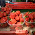 ОБЗОР ЦЕН: Первые ласточки весенних рынков — огурцы и клубника