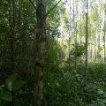 Metsaomanike seas läbi viidud küsitlusest selgus, et nad on valdavalt teinud oma metsas hooldusraied (71%) ning märgatavalt vähem uuendusraied (46%).