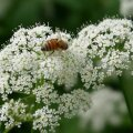 Üle pika aja suundub koolipingist mesilatesse paarkümmend koolitatud mesinikku