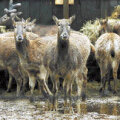 Loomaaia hirved ootavad Bill Clintonilt raha