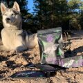 Husky Elli ja tooted, mille ostult läheb osa kelgukoerte abistamiseks