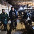 Sirje ja Aivar Tsimmer võivad oma aastatepikkusest tööst rõõmu tunda – nende Sepa talu karjas on Eesti ühed tervemad lehmad.