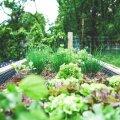 Новый тренд среди жителей Таллинна: общинные сады стали своеобразным магнитом для горожан