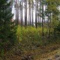 Rasked valikud: mis saab Are aleviku keskel asuvast metsast ning vanast raudteest