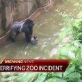 VIDEOD: Ohio loomaaia gorilla sai enda kätte väikse lapse, loom lasti maha