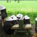 """Suigu kooli """"mesinikud"""" Metsamoori mesilas. Foto A. Annuste"""