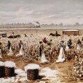 Puuvillaistandus USA-s 1890. aastatel. Herman Hubneri maal.