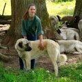 LAMMASTE KAITSJA: Rõõmu talu peretütar Hava Kuks ja Kesk-Aasia lambakoer Lehte.