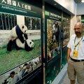 Pekingis sai kõige muu kõrval uuritud, kuidas paljunevad pandad.