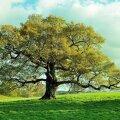 OHOO! Puud võivad olla ohtlikud mitmes mõttes