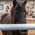 Сага с изнасилованием лошадей: суд признал виновной конюшню, а не насильника
