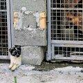 Marutaudi ja koledat linnamuljet kartes korraldati Ukrainas sel suvel enne jalgpalli EM-i suur hulkuvate koerte püüdmine.
