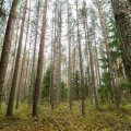 Полиция — о спасении пожилой женщины: это настоящее чудо, провести 8 дней в лесу может быть не по силам даже молодым людям