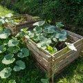 Kui kompostikasti on kogunenud piisavalt materjali, võib sinna istutada näiteks mõne kõrvitsataime.