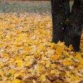 USA ilmateenistus lubab Eestile sooja oktoobrit ja detsembrit, aga külma novembrit