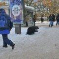 FOTOD: Eluheidikuid lumine oktoober ei sega