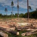 Vabaerakond: valitsus paneb Eesti metsa ohtlikult suure surve alla