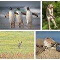 ФОТО   Определены самые смешные снимки животных 2021 года