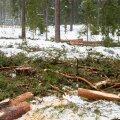 Teadlased rõhutavad, et biomassi põletamine soojendab kliimat ja hävitab elurikkust.