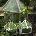 Üksikute väiksemate taimede kaitseks sobivad minikasvuhooned.