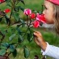 Tallinn tõmbab lapsehoiu hüvitise saajate ringi koomale