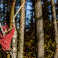TASUB TEADA | Mida teha, kui oled metsa eksinud?