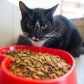 Мифы и правда о кормлении котов и кошек: что лучше не давать вашим любимцам