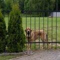 Tartumaal tuli aia vahele kinni jäänud koer sealt lahti lõigata