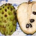 Troopilistel puuviljadel on tihti suured ja kasvatama ahvatlevad seemned