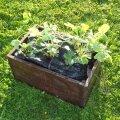 Maasikakastile on kinnitatud köitest sangad, nii saab seda vajadusel mugavalt ühest kohast teise tõsta.