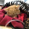 Kass Marten sai parvoviiruse diagnoosi 2018 aasta lõpus. Olukord tundus täiesti lootusetu, kuid kolme päevaga paranes tema seisund märkimisväärselt. Tänaseks on Marten päriskodus. Ta on rõõmus ja reibas.