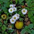 Õunapuud lasid õunad robinal maha, kõik mädanenud ja ussitanud.
