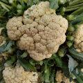 Pruunid täpid ei sega lillkapsa söömist