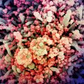 Koroonaviirus hävitamas inimrakke
