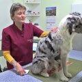 VIDEO: Just niimoodi tuleb kasutada koertel puukide tõrjeks mõeldud ravimeid