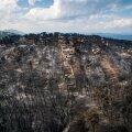FOTOD   Kreeka maastikupõlengus hukkunute arv on tõusnud 79-ni