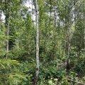 Сегодня в Мустамяэ состоится День леса для всей семьи!