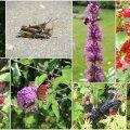AIAHOOLIKU BLOGI | Kilde ja uitmõtteid augusti alguse aiast
