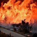 FOTOD ja VIDEO | California maastikupõleng ähvardab Santa Barbara maakonda ja on kasvanud suuruselt lähiajaloo viiendaks
