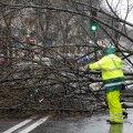Ida-Eesti päästjad kõrvaldasid teele kukkunud puid