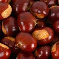 Milleks meile võõramaised pesupähklid kui kodumaised kastanid teevad ära sama töö?