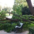 Murdunud puu Balti jaama juures