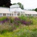 Uuele elule ärganud kasvuhoone ees laiub Piet Oudolfi kujundatud püsilillevälu.