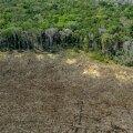 Amazônia metsade kadu on Brasiilia presidendi Bolsonaro valitsemisajal kasvanud viimase 12 aasta suurimaks