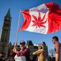 """Ottawa parlamendihoone ees tähistati eile """"riiklikku kanepipäeva"""". Samal päeval teatas valitsus ÜRO-s, et liigub legaliseerimiseelnõuga edasi."""