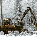 NÄDALA NÄGU | Andrus Kivirähk: metsa raiumine kui kunstirööv